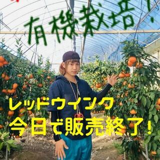 希少高級柑橘 レッドウインク 幻のみかん 10kg(フルーツ)
