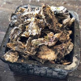 ⭐︎送料込み⭐︎殻付き牡蠣 1キロ 10個〜13個 (魚介)