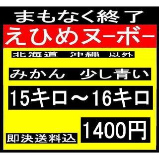★青中9   えひめヌーボーの みかん少し 色付きが悪い訳あり  (フルーツ)