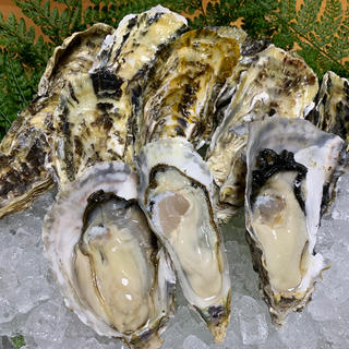絶品 生牡蠣 カキ 5キロ(約50〜60個)軍手ナイフ付 伊万里湾産 送料無料(魚介)