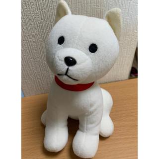 Softbank - お父さん犬 ぬいぐるみ