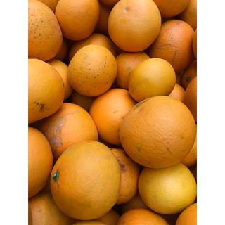 清見オレンジ 10kg詰め合わせ、家庭用、和歌山産(フルーツ)