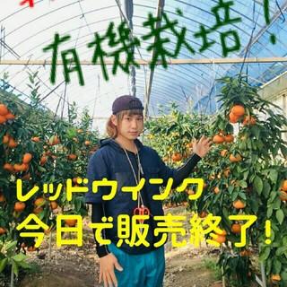 希少高級柑橘 レッドウインク 幻のみかん 5㎏ (フルーツ)