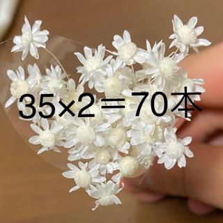 スターフラワーミニ 35×2=70本 ★送料無料★(ドライフラワー)