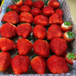 正規品●大粒いちごさん●820g●苺イチゴ(フルーツ)