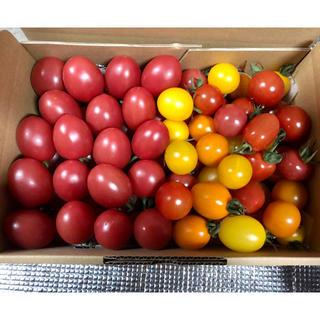 ミニトマト詰め合わせ 2キロ(野菜)