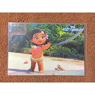 Disney - ディズニー モアナ ポストカード