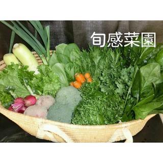 新鮮野菜セット100-③(野菜)