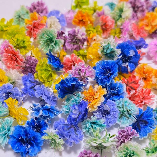 【100粒】ドライフラワー(かすみ草)MIX30 ハンドメイドのフラワー/ガーデン(ドライフラワー)の商品写真
