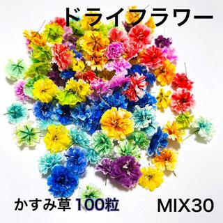 【100粒】ドライフラワー(かすみ草)MIX30(ドライフラワー)