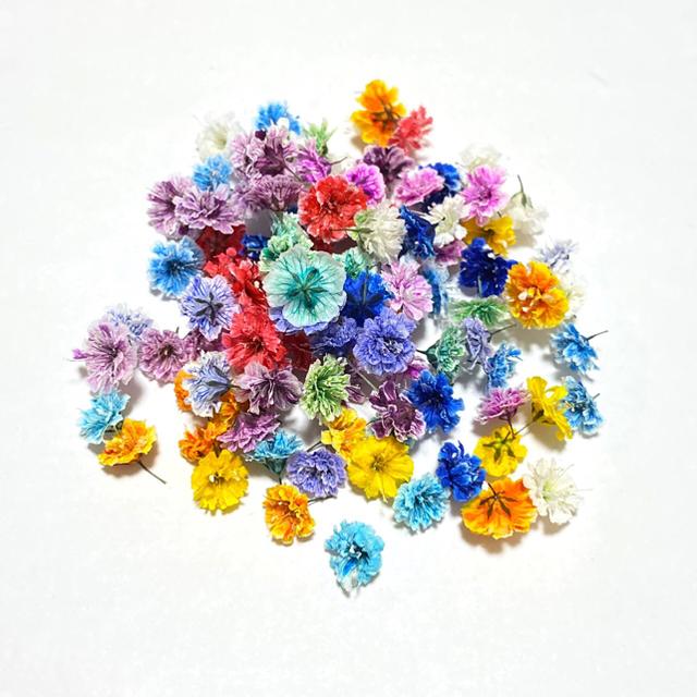 【100粒】ドライフラワー(かすみ草)小中サイズ ハンドメイドのフラワー/ガーデン(ドライフラワー)の商品写真
