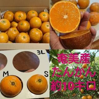 奄美産 たんかん10kg(フルーツ)