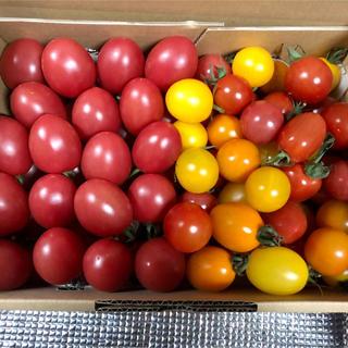 ミニトマト詰め合わせ2キロ(野菜)