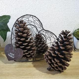 東京神代植物園❤︎大きな松ぼっくり❤︎3ケ❤︎ハートワイヤーかご付き(ドライフラワー)