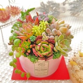 ◆専用◆贅沢寄せ植え babyピンク×アンティークラベル すぐ飾れる◎(その他)