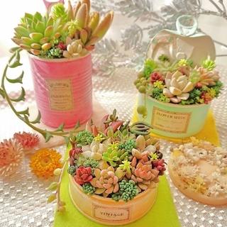 ◆お風呂様専用◆ カラフルcolorリメ鉢3つセット&贅沢ピンクbabyピンク鉢(その他)