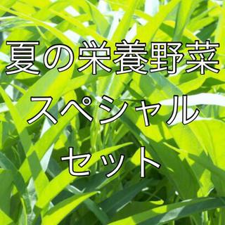 夏の栄養野菜 スペシャルセット!ツルムラサキ・空芯菜・緋赤ヒユナ 全て固定種  (野菜)