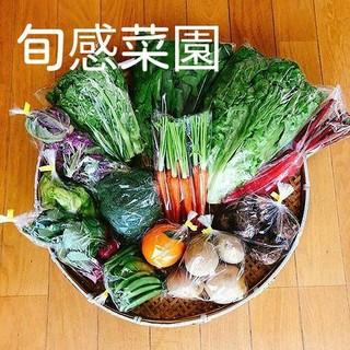 新鮮野菜セット100-④(野菜)