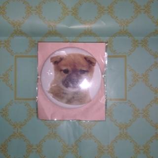 柴犬 缶バッジ(犬)
