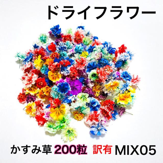 【200粒】※訳有※ドライフラワー(かすみ草)MIX05 ハンドメイドのフラワー/ガーデン(ドライフラワー)の商品写真