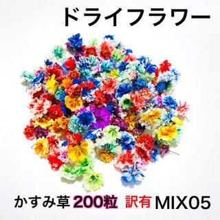 【200粒】※訳有※ドライフラワー(かすみ草)MIX05(ドライフラワー)
