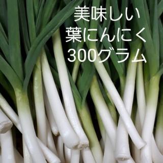 認定にんにく農家直送 葉にんにく300グラム(野菜)