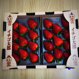 奈良県産 高級苺 古都華 2L 1箱(フルーツ)
