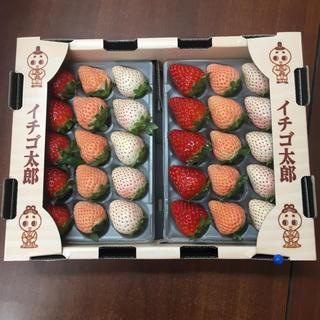 奈良県産 高級苺 3色苺(フルーツ)