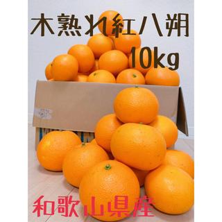 木熟れ紅八朔 10kg L〜2L 和歌山県産紅はっさく(フルーツ)