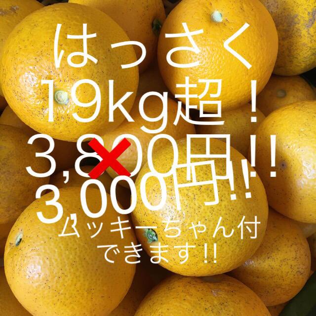 はっさく 19kg超 ご家庭用 食品/飲料/酒の食品(フルーツ)の商品写真
