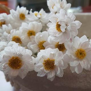 花かんざし 30本 ドライフラワー 花材(ドライフラワー)