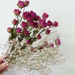 スプレーバラ ピンクパープル かすみ草セット 【花材】(ドライフラワー)