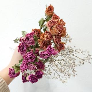 スプレーバラ ピンク&イエローピンク2色セット おまけかすみ草付き 【花材】(ドライフラワー)