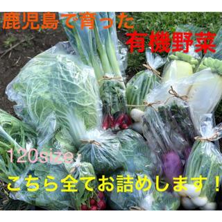 鹿児島で育った有機野菜詰め合わせ 120サイズ(野菜)