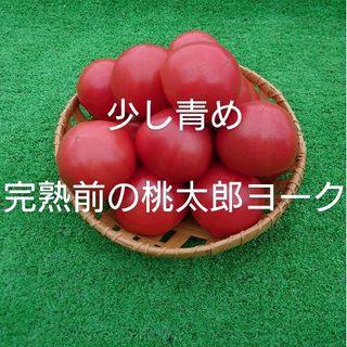 完熟前の少し青めの桃太郎ヨーク2.5キロ(野菜)