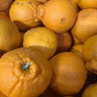 週末限定価格 和歌山県有田産 わけあり不知火 5kg(フルーツ)