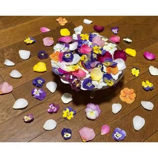 お花屋さんが作った春色プリムラと可愛い薔薇の花びらの山盛り80冠‼️(ドライフラワー)