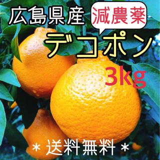 減農薬  デコポン 3キロ ノーワックス 広島県産 大崎上島 瀬戸内 数量限定(フルーツ)