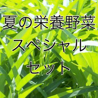 夏の栄養野菜 スペシャルセット!ツルムラサキ・空芯菜・緋赤ヒユナ 全て固定種(野菜)