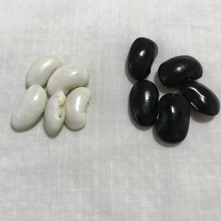大きな豆 花豆の種 白花豆 5粒 黒花豆 5粒(野菜)