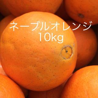 ネーブルオレンジ10kg(フルーツ)