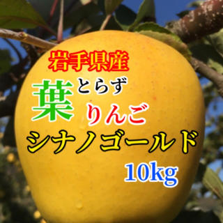 【送料込】葉とらずりんご シナノゴールド 30〜40個 約10kg(フルーツ)