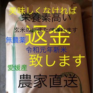 18日発送 かずちゃん米 無農薬 特選こしひかり 30㎏ 玄米(米/穀物)
