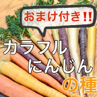 【豪華おまけ付‼️】カラフルにんじんの種 50粒 ニンジン 人参 野菜 種 タネ(野菜)