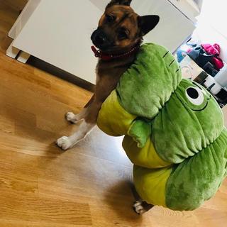 シマムラ(しまむら)のしまホイ しまむらホイホイ ロールクッション (犬)