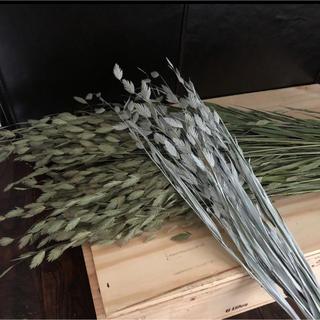 ドライフラワー ワイルドオーツ 北海道花材(ドライフラワー)