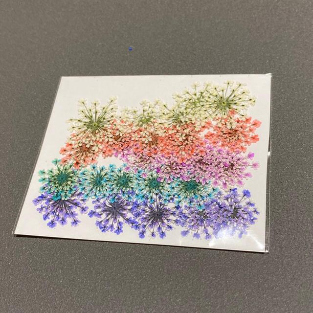 【25枚】押し花(レースフラワー )5色 ハンドメイドのフラワー/ガーデン(ドライフラワー)の商品写真