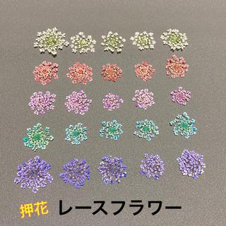 【25枚】押し花(レースフラワー )5色(ドライフラワー)