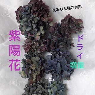 専用*北海道の秋色紫陽花*ドライ*ブルー系*(ドライフラワー)