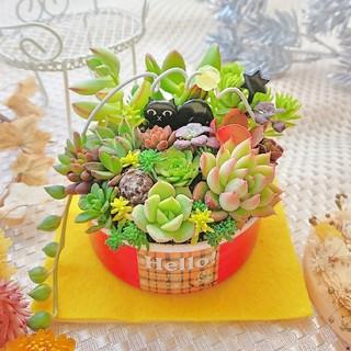 多肉植物 黒猫 お座りにゃんこ(ФωФ)多肉の森 レッドリメ鉢(その他)